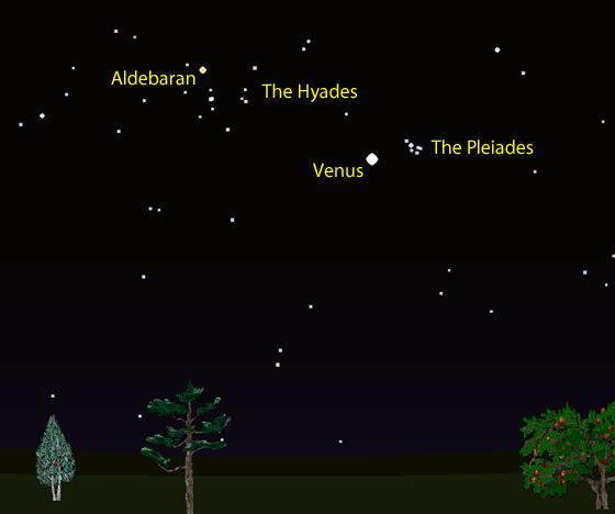 Venus, the Hyades & the Pleiades